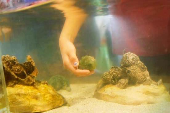 Touch Tank Encounter
