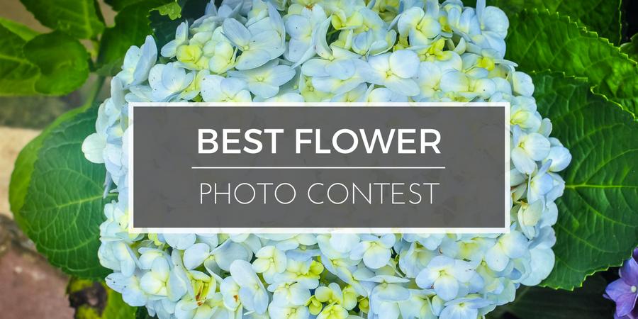 Best Flower Photo Contest